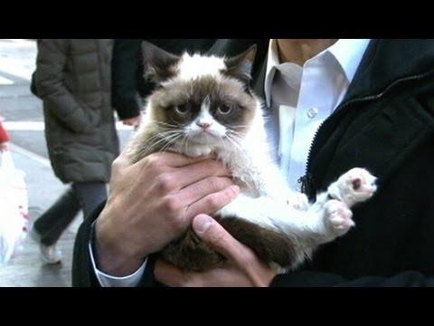 不機嫌猫さんのインタビュー Grumpy cat interview
