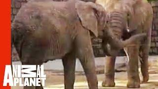 Electrified Elephant
