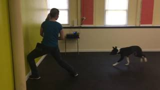 "Training | Kristen working with Tux on the trick ""Hit It"" 