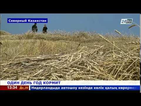 Аграрии Северного Казахстана борются за урожай