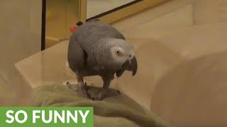 Discriminating parrot has specific dinner request