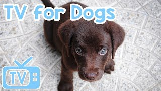 Dog TV: Entertainment for Dogs and Puppies! Relax Your Dog!