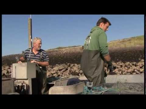 Een film met en over Job Bout. Hoe hij met de zegen op de harder vist. Wat het gevolg is van de zandhonger voor de harders en het harderen. De ambachtelijke manier van vissen, kleinschalig...