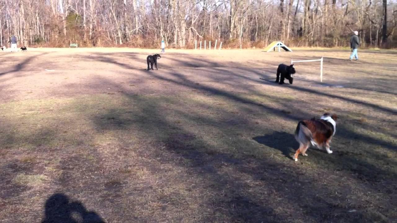 Freedom Park Dog Park Medford Freedom