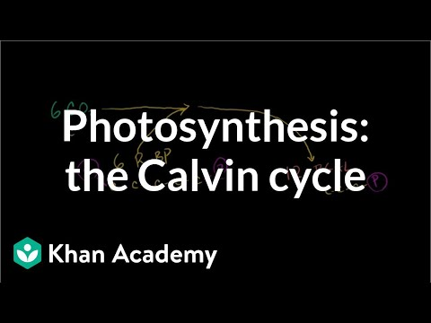Photosynthesis:  Calvin Cycle