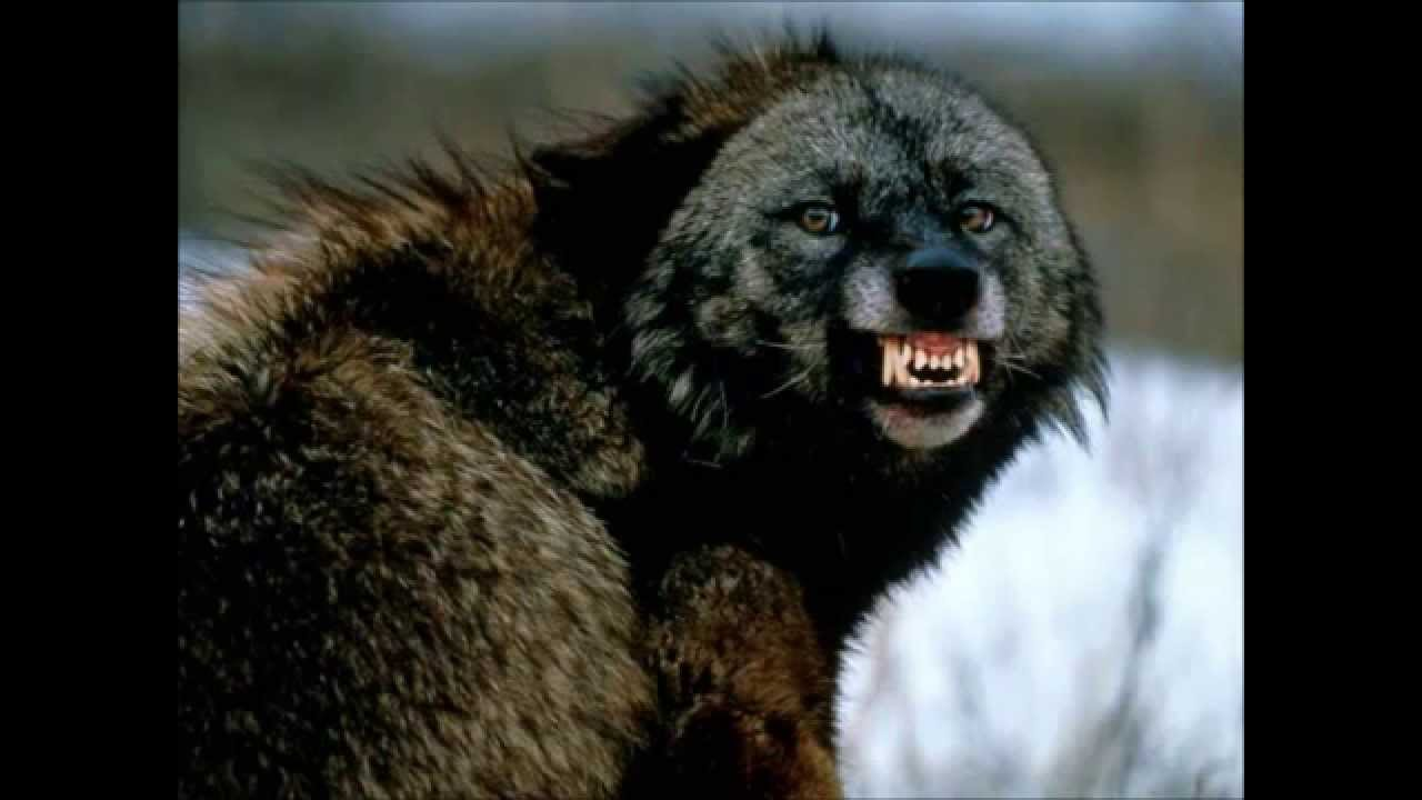 Top 17 plus fortes morsures des animaux ! - YouTube
