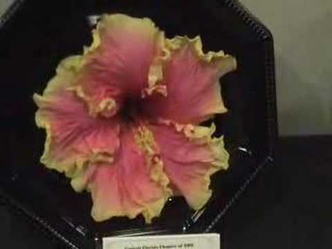 2008 Orlando Hibiscus Show Video