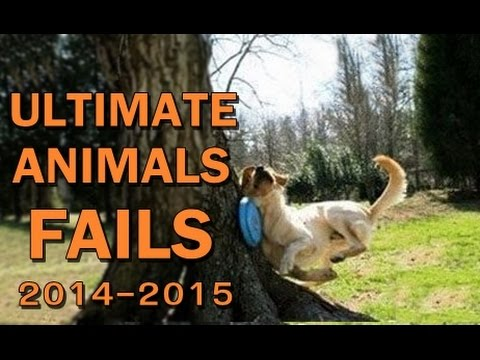 Ultimate Animal Fails Compilation 2014-2015 ✔