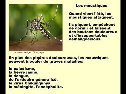 Piqure de taon - Se debarrasser des moustiques ...