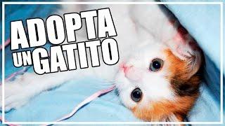 SOY KIRA Y QUIERO CONTARTE ALGO #AdoptaUnGatito | Lady Boss