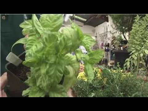 Beginners Vegetable Gardening : Herb Garden on the Balcony