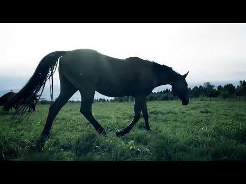 Видеосъемка на природе с лошадьми