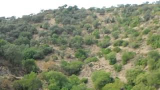 Monteria en La Baja. Tamujar 10. Nov 2011. 2 cochi