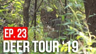 We CALLED in a BOBCAT! - Still Hunting With a Bow