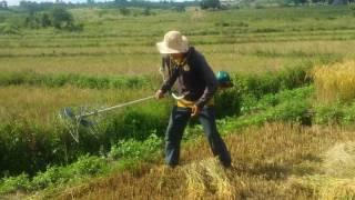 Phát minh hữu ích của nông dân (máy cắt lúa nhanh gấp 10 lần cắt bằng tay)