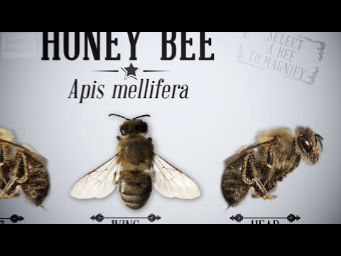 Micro-Science: The Honey Bee [Interactive] - SEM - Earth Unplugged