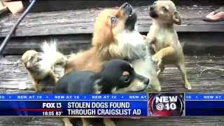 Stolen dogs found through Craigslist ad