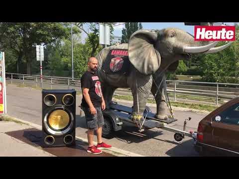 Elefant zog ORF-Talk durch Kakao!