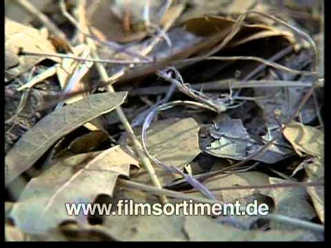 Schulfilm: DIE FASZINIERENDE WELT DER INSEKTEN (DVD / Vorschau)