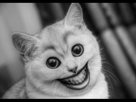 Свежие коты Cats Fun
