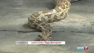 Mettupalayam youths capture this python