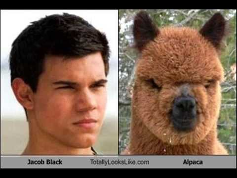 funny look-a-likes