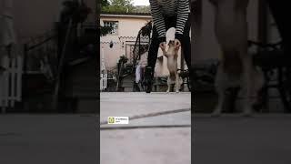 Funny dog walking