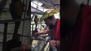 Как кормить попугая семечками очень милый прикол