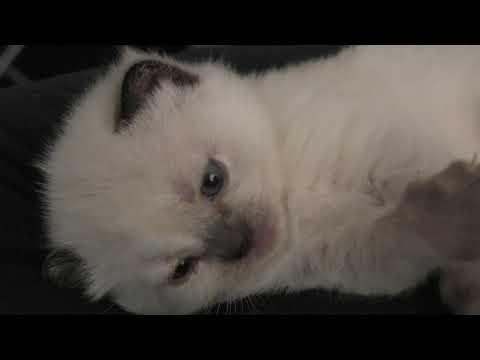 Милый котенок Зефирка   2