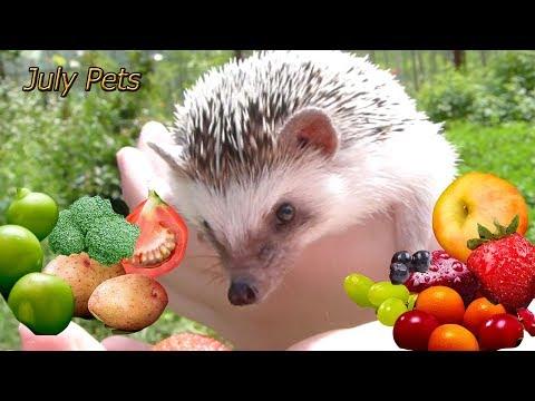 Какие овощи и фрукты можно ежикам ????