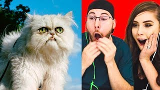 DO NOT LAUGH CHALLENGE! FUNNY CATS!