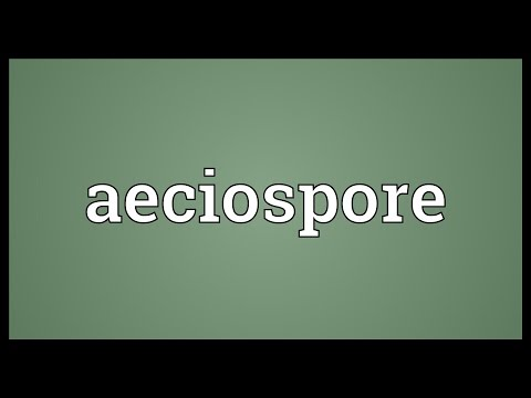 Header of aeciospore