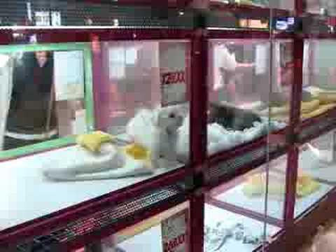 Pet Shop Tokyo 071006 Tokyo Japan Pet Shop