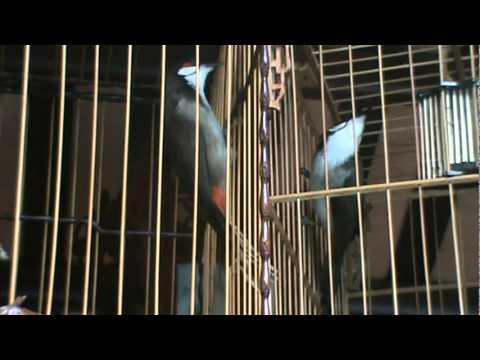 chao mao Trung Mang Boxing cua Duy Hoi An, clip ngay 4 thang 11 nam 2010