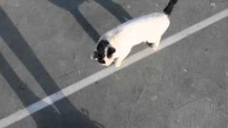 Cat attack in Jerusalem