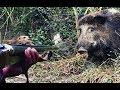 Как охотиться на кабана летом и осенью? Секреты охоты на кабана!