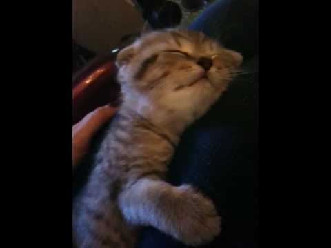 kitten ponyo sleeping with a moving mouth