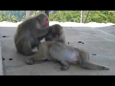 Monos haciendo monerias