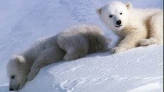 Cool Cute Cubs - Amazing Animal Babies: Polar Bear Cubs (Ep 6) - Earth Unplugged