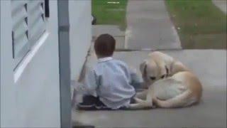 Conmovedor video muestra a un perro cuidando a un nene con síndrome de Down