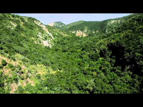 Video over het Addo Elephant National Park in de Eastern Cape in Zuid-Afrika