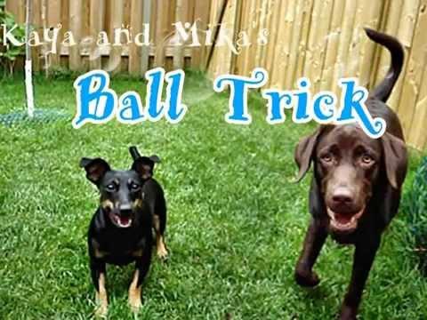 Kaya and Mika Ball Trick
