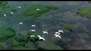 Алевтина Егорова - Птицы белые