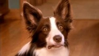 Funny Dogs Scared of Farts - Funny Videos Compilation 2015