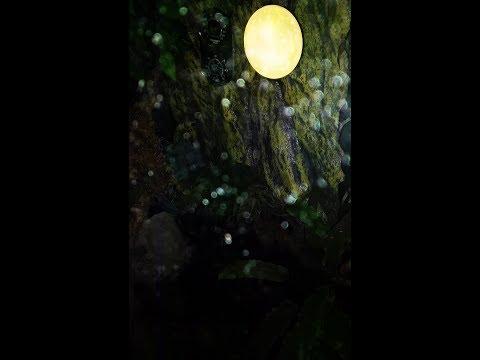 Exo Terra Full Moon Review