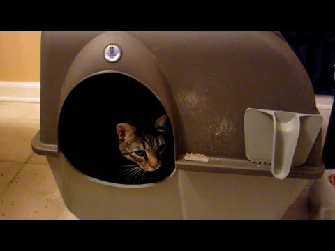 Where to keep your cats litter box