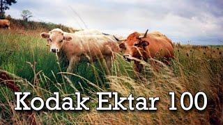 Kodak Ektar 100 Film Review - Leica iiiC