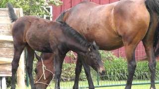 Mama-horse with foal twins