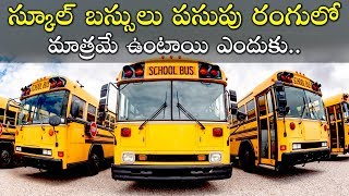 Why School Buses are Yellow in Colour in India | Unknown Facts in Telugu