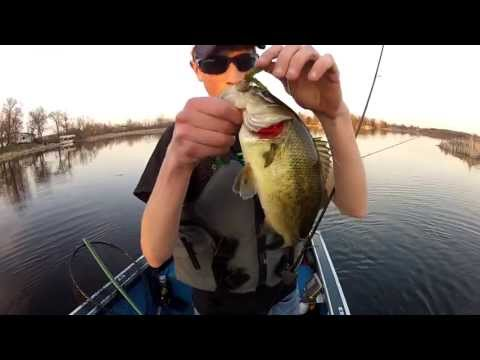 Spring Bass Fishing Pre Spawn Bass